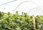 Cryptocurrency Provides Payment and Tax Solutions for the Cannabis Industry